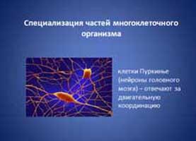 prezentaciya_k_uroku_